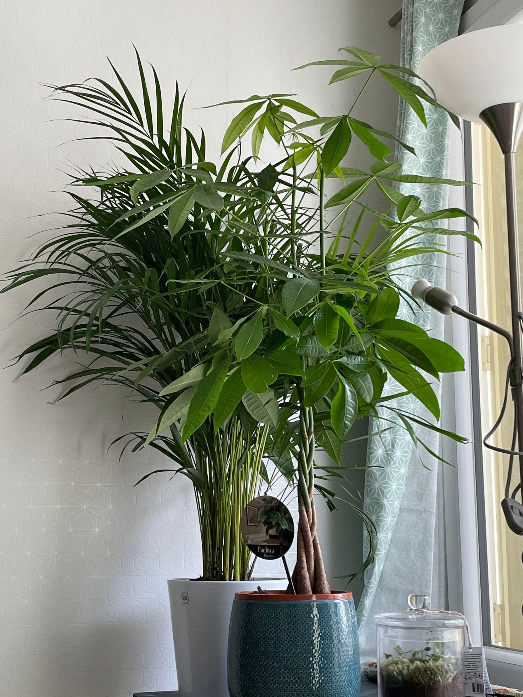 Les plantes en question qui ont besoin d'être arrosées