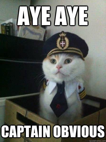 Chaton déguisé en capitaine obvious